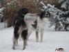 2017 1 Appia a Janek 1, český strakatý pes