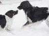 2017 1 Appia a Janek, český strakatý pes