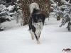 2017 1 Janek 1, český strakatý pes