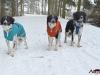2017 1 trio 5, český strakatý pes