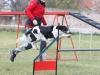 tessy-ratenice-2012-4 agility 4 11 2012