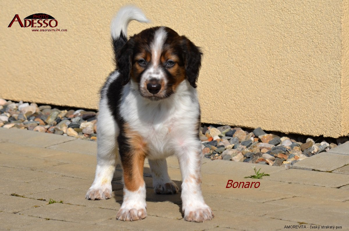 Bonaro Amorevita 21032014