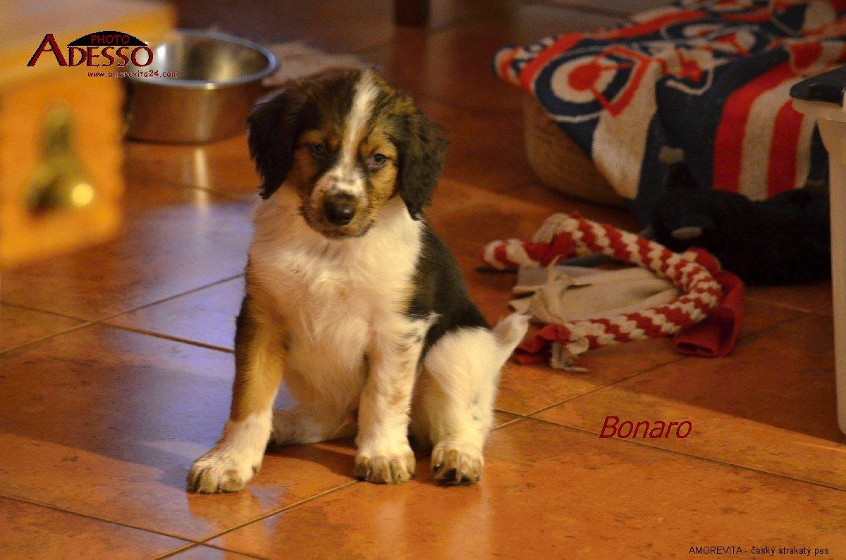 bonaro-30032014-1