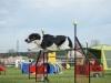tessy-1 český strakatý pes