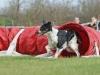 tessy-2 český strakatý pes