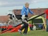tessy-3 český strakatý pes
