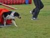 tessy-4 český strakatý pes