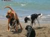 it-tessy-dvoupatrovy-pes