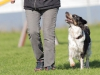 český strakatý pes, o pocernickou kost