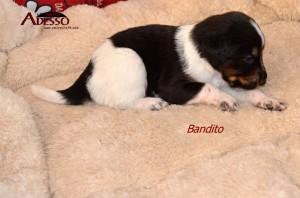 Bandito 05032014 2