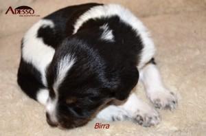 Birra 05032014 2
