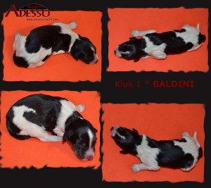 1-Baldini-profil-12022014