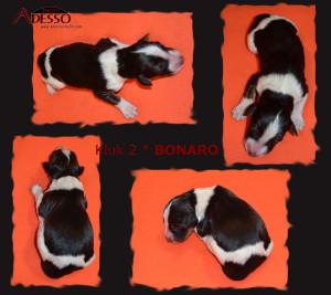 2-Bonaro-profil-12022014