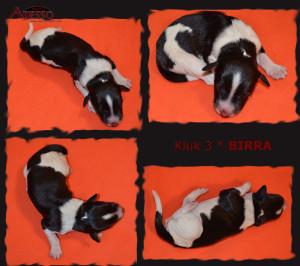 3-Birra-profil-12022014