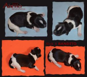 4 Bandito-profil-12022014
