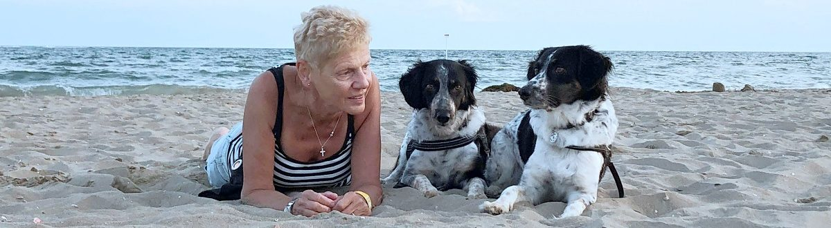 AMOREVITA – český strakatý pes